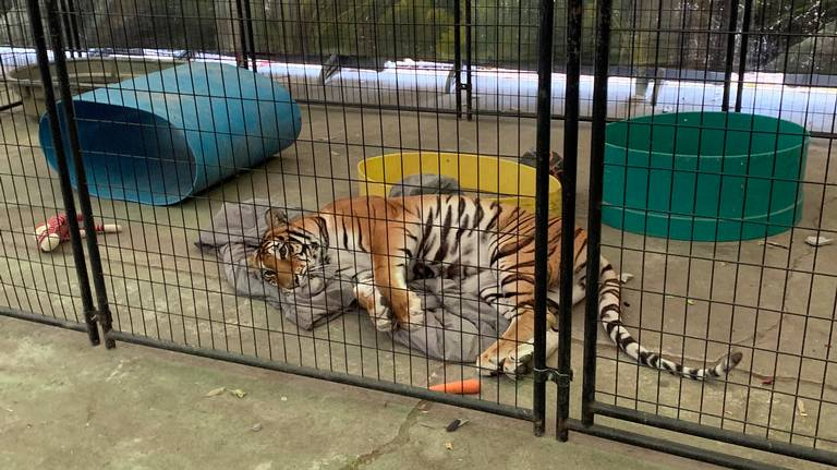 Animal cruelty at Stanislaus County Fair? No, but wildcat exhibit missed mark